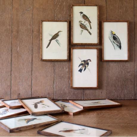 Set of Framed Prints of Birds