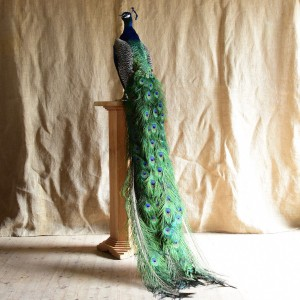Peacock on Arts and Crafts Stand