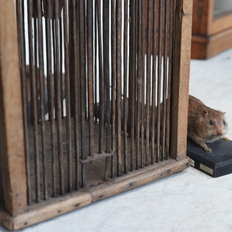 Rat Trap c.1800