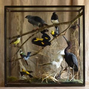 South American Birds by Rowland Ward