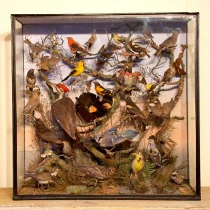 Taxidermy: American Birds by Henry Ward
