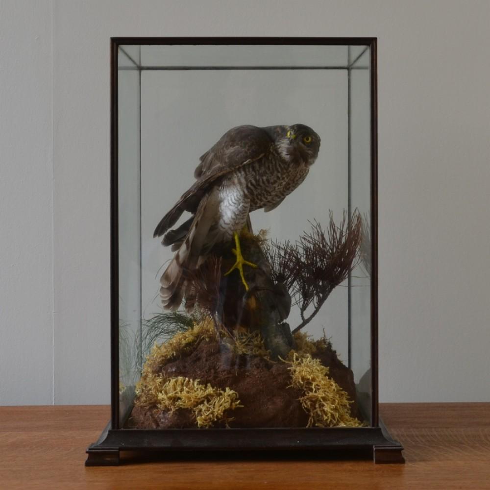 Taxidermy A Cased Bird