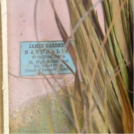Case of Herons by Gardner