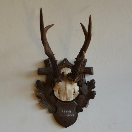 Roebuck Antlers