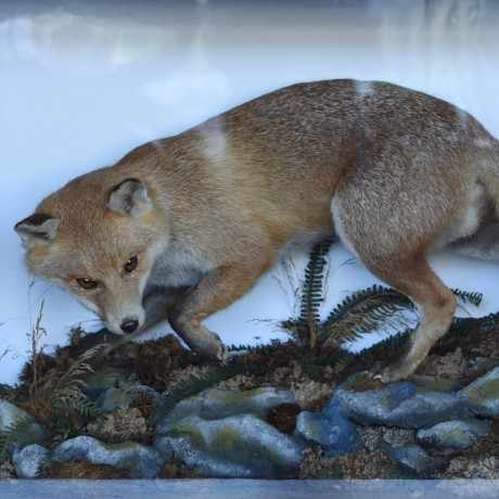 Victorian Fox